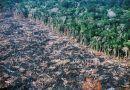 Brasil: ¿Crecer a costa de la Amazonia?