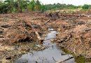 El suministro mundial de alimentos está seriamente amenazado debido a la pérdida de biodiversidad