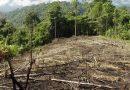 La Amazonia peruana en peligro por saqueo deforestador