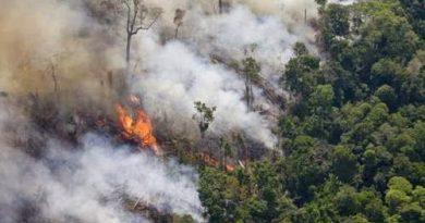 Quemar la Amazonía es un crimen contra la humanidad