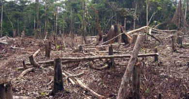 Exigen medidas drásticas y urgentes para detener la pérdida de biodiversidad
